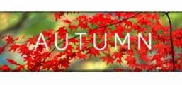 Autumn Game